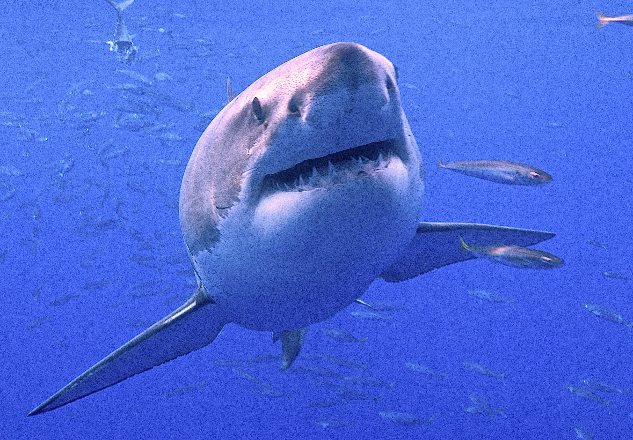 How to Prevent a Shark Attack