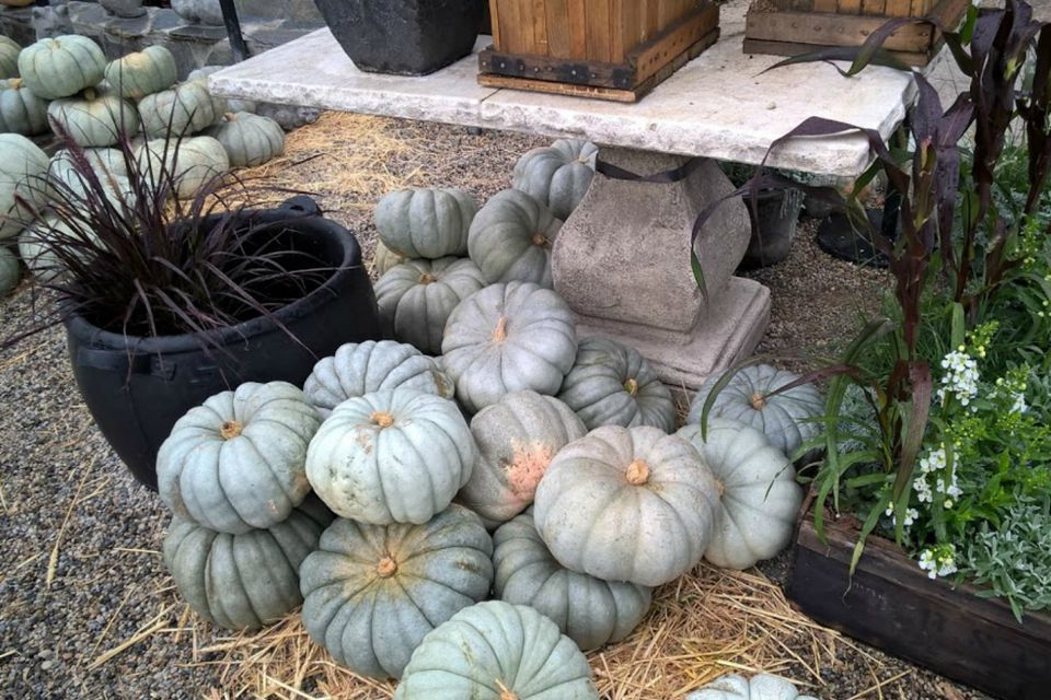 pumpkins and grasses