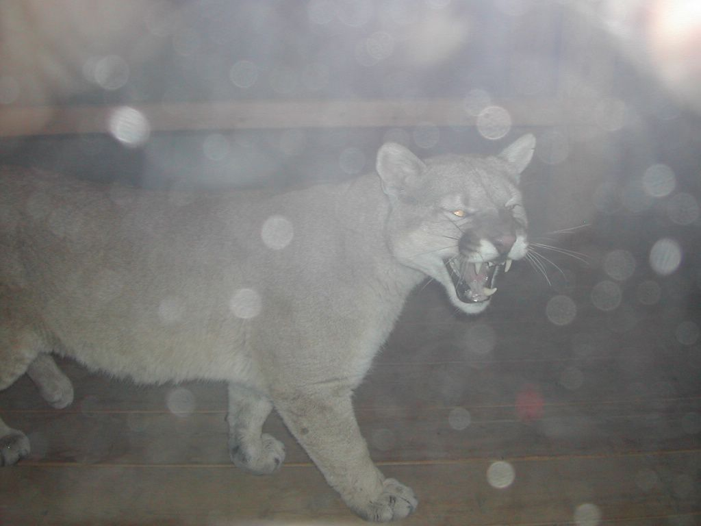 The cougar on the porch photos urban legends sciox Image collections