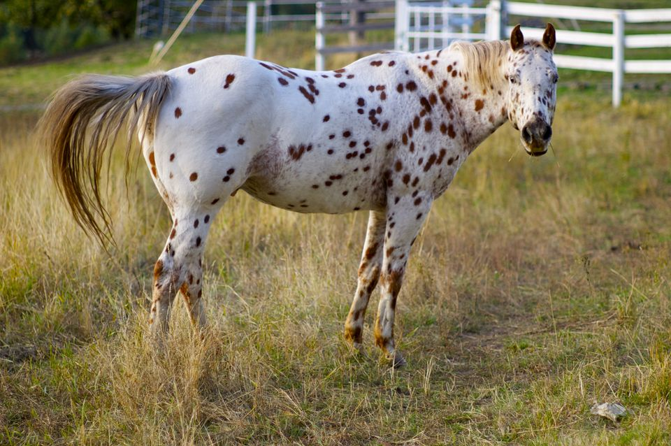 Popular Horse And Pony Breeds For Children
