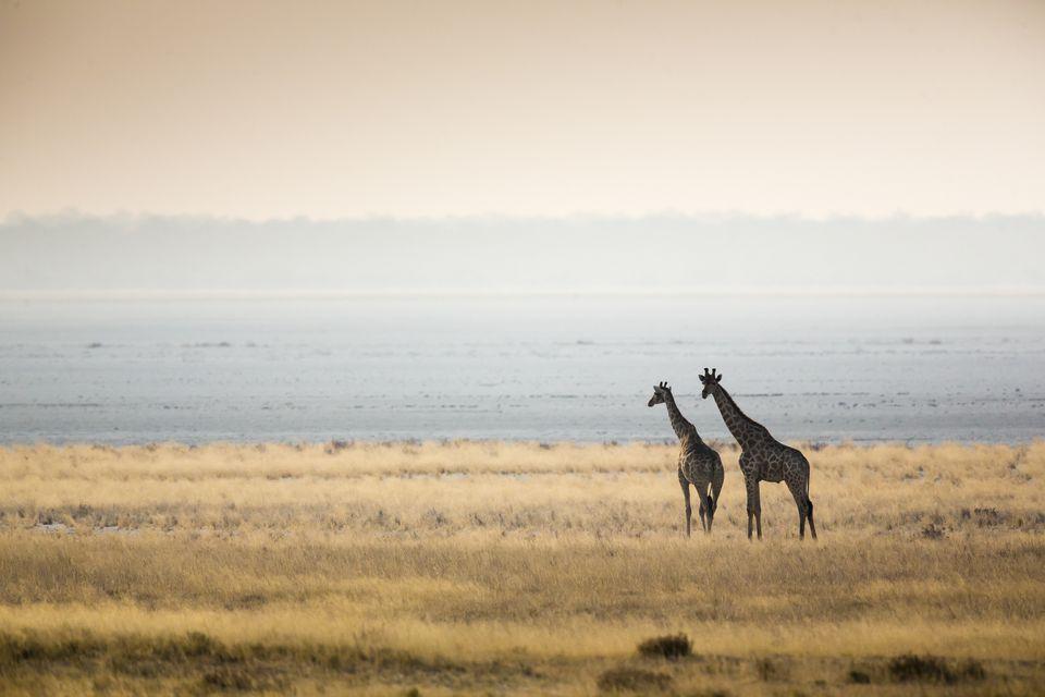Etosha National Park: Namibia's Wildlife Haven Etosha Pan