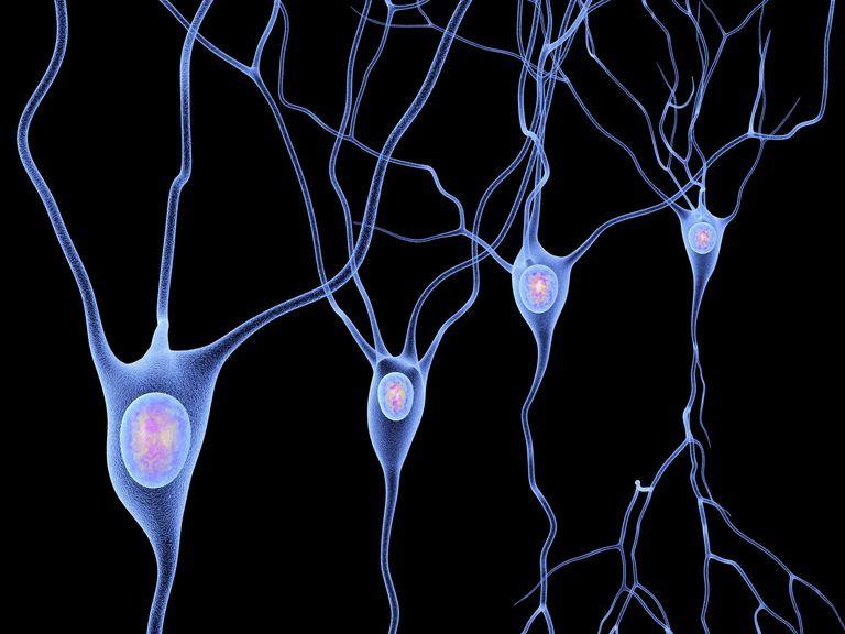 Nerve cells.