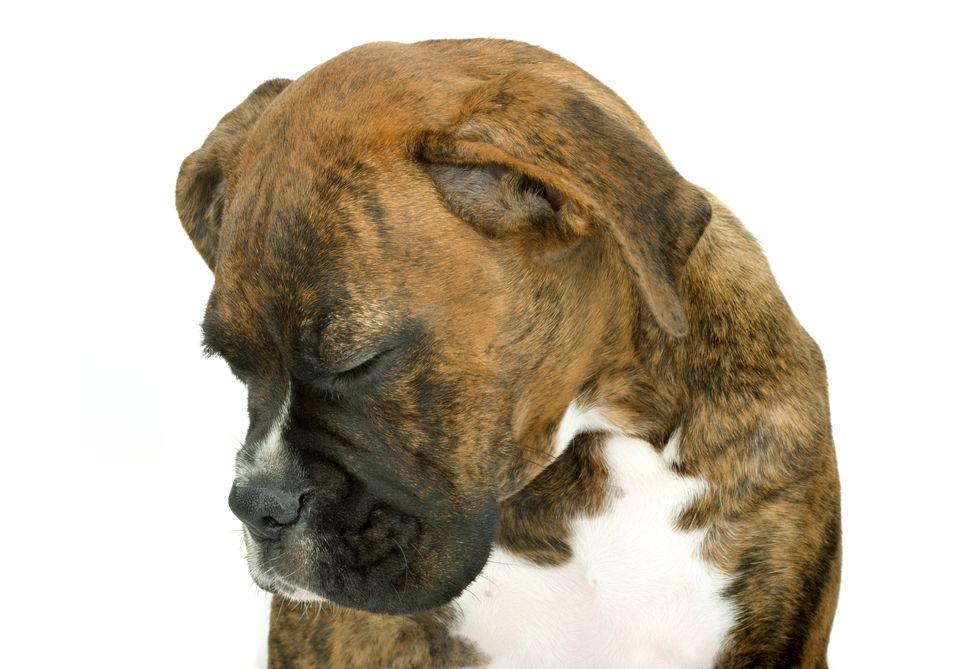 sad-dog-MartinRogers-getty.jpg