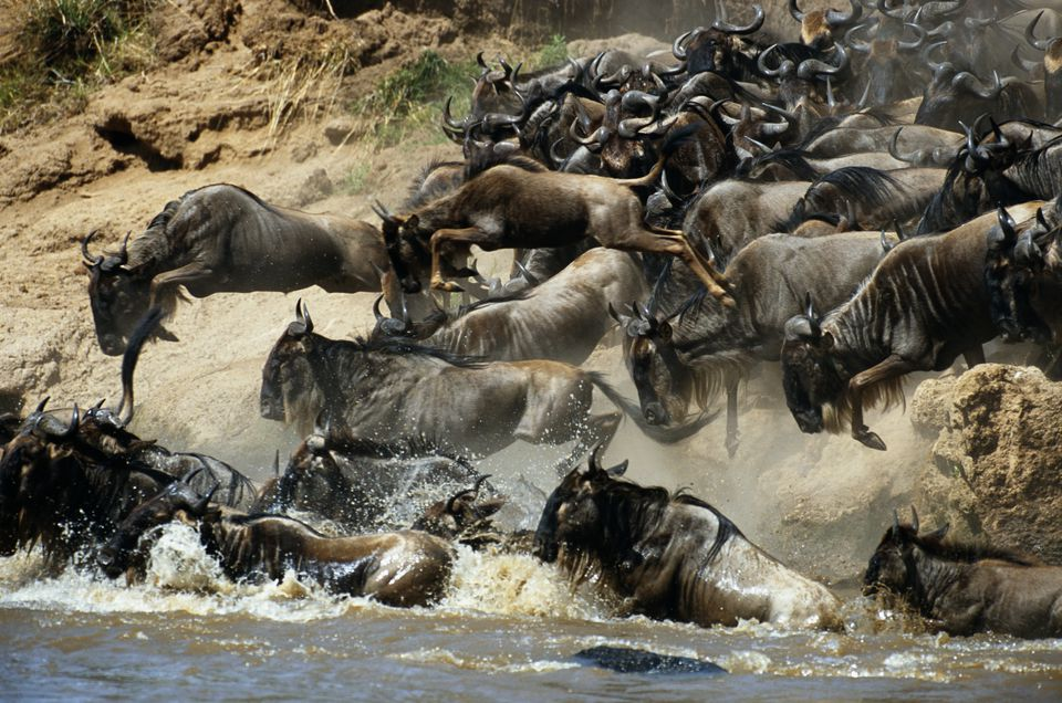Top African Destinations Wildebeest Maasai Mara