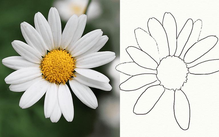 draw a daisy