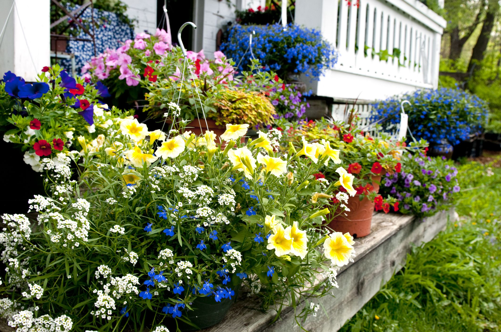 How To Use Bedding Plants In Your Lawn Or Garden