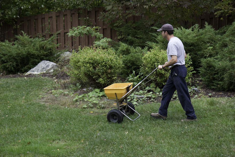 A landscaper fertilizes a lawn