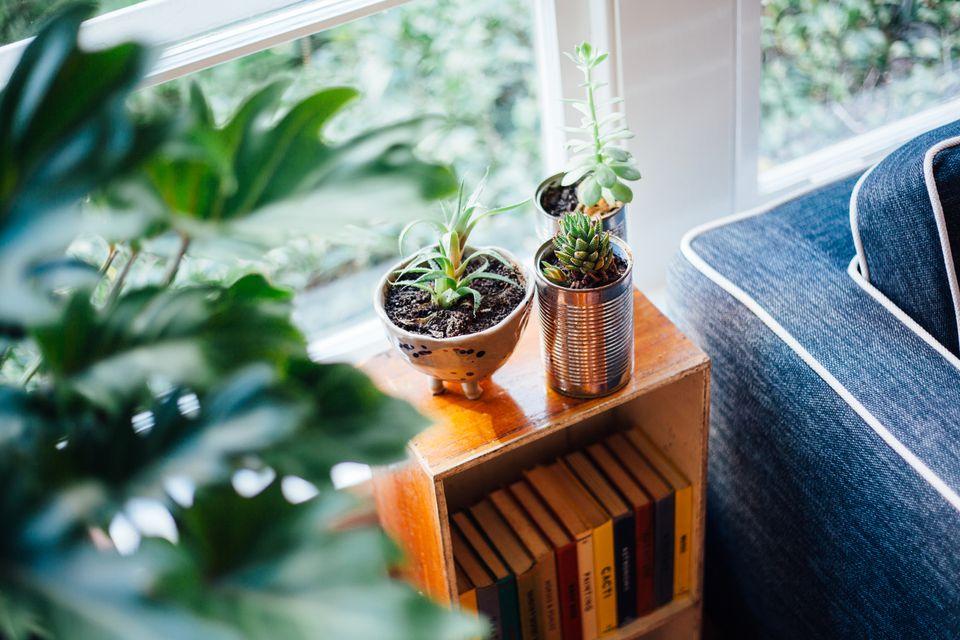 Potted plants on bookshelf