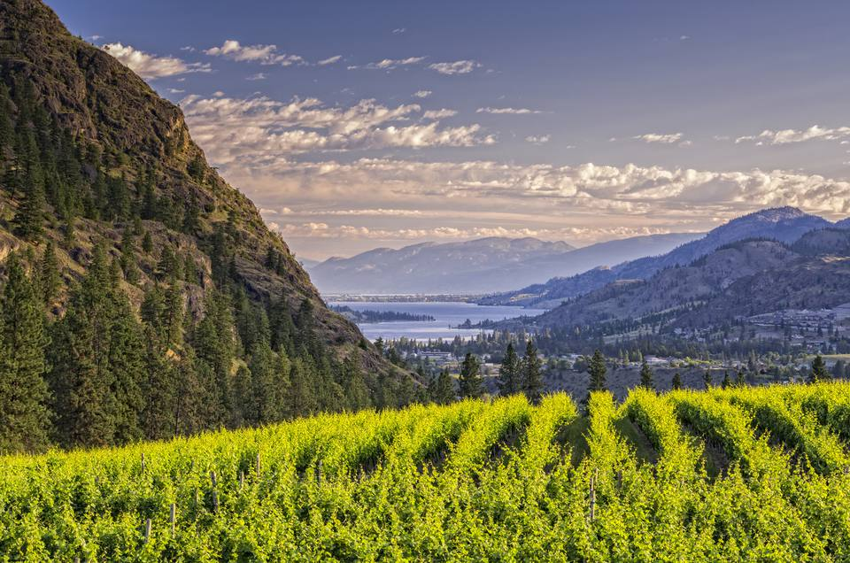 Vineyards with mountains and Skaha Lake from Okanagan Falls in the south Okanagan Valley of British Columbia, Canada