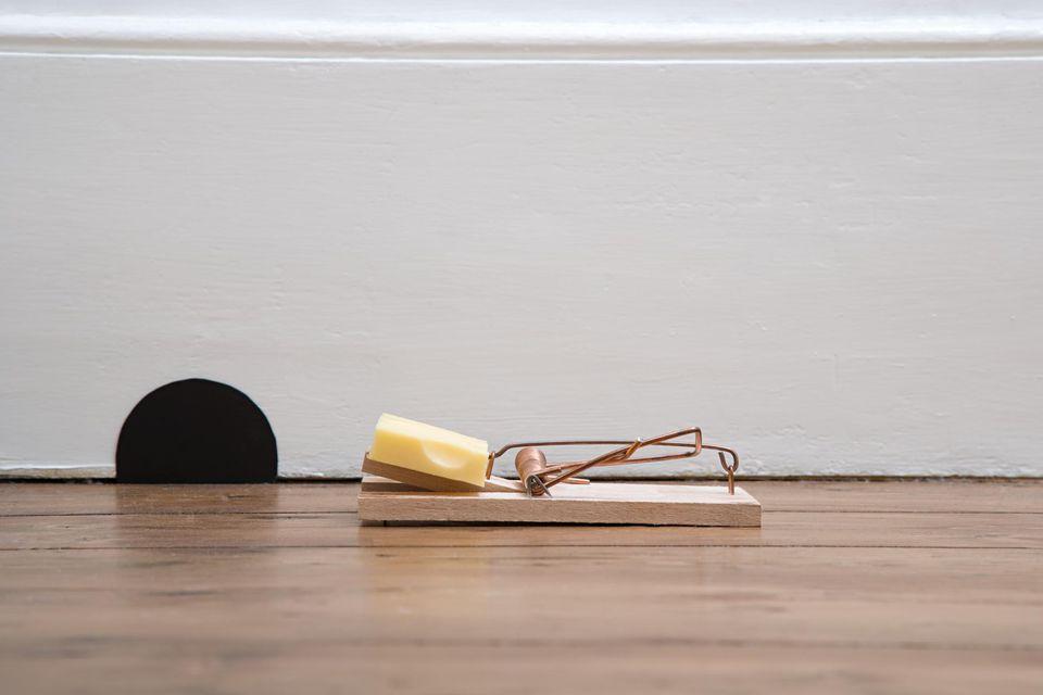 Mousetrap outside a mouse hole