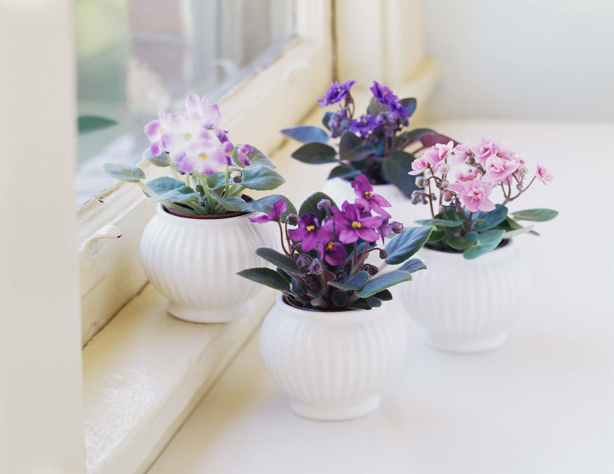 Top 8 Easy Care Flowering Houseplants