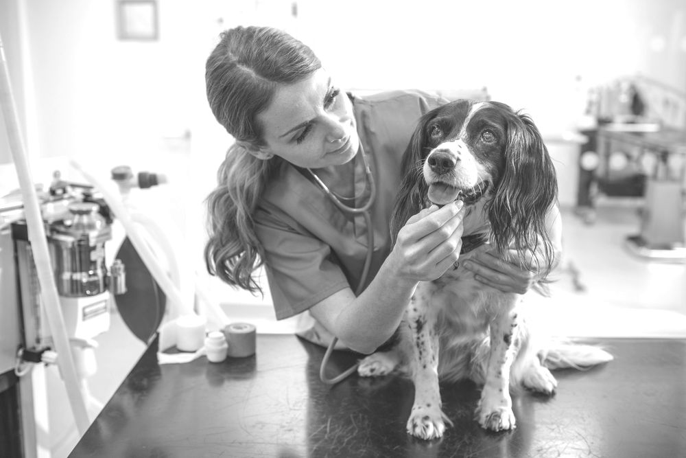 Veterinarian tending to dog patient