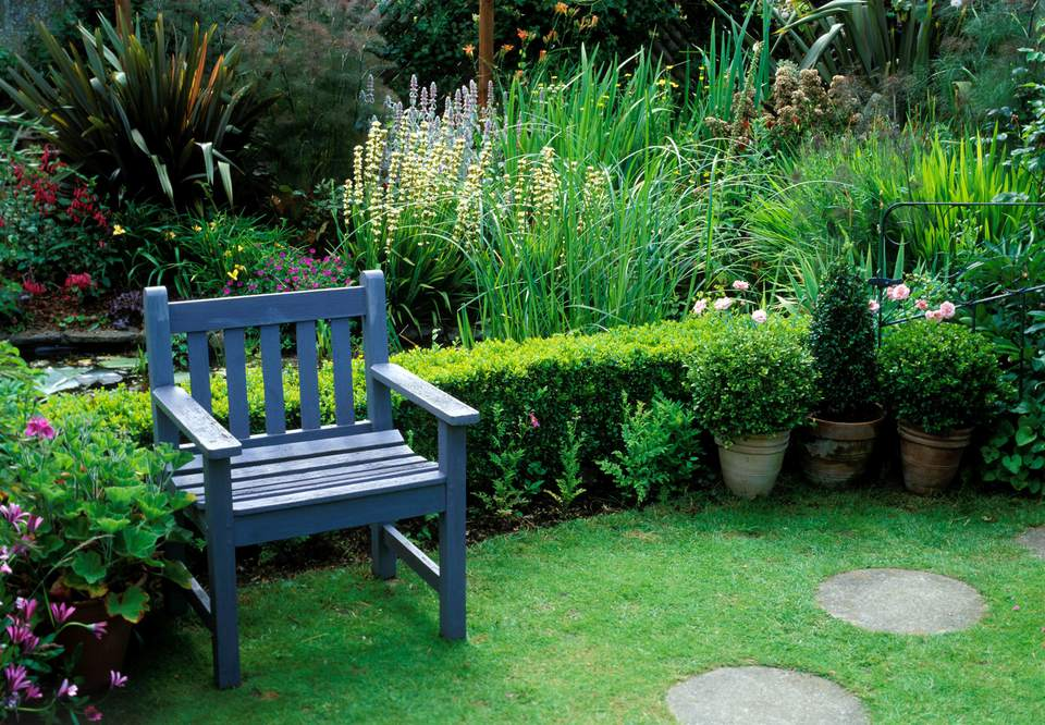 Blue painted wooden seat on lawn by border - bronze fennel, osteospermum, phormium. leigh cottage, isle of wight. owners: yvonne & chris matthews