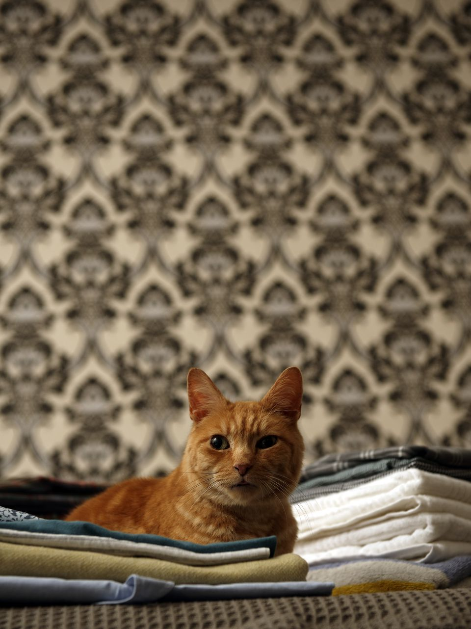 Ginger tabby cat sitting on top of pile folded laundry