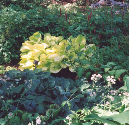 There's a Hosta for Every Garden.