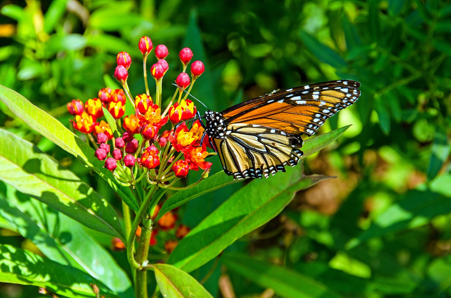 monarch butterfly reserves in mexico