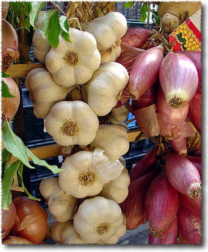 Treccia D'Aglio: Garlic Braid