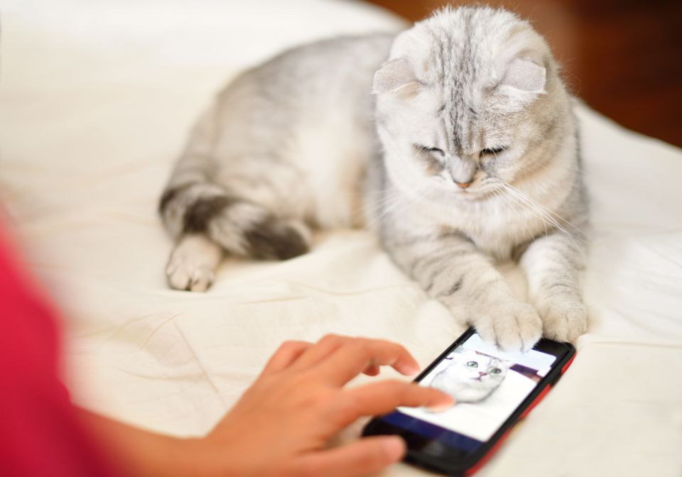 Kitten looks at and play mobile phone on bed.