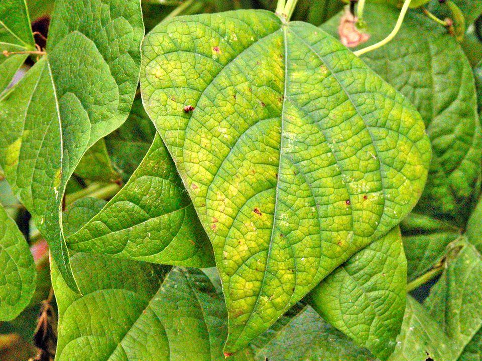 Signs of Plant Nutrient Deficiencies