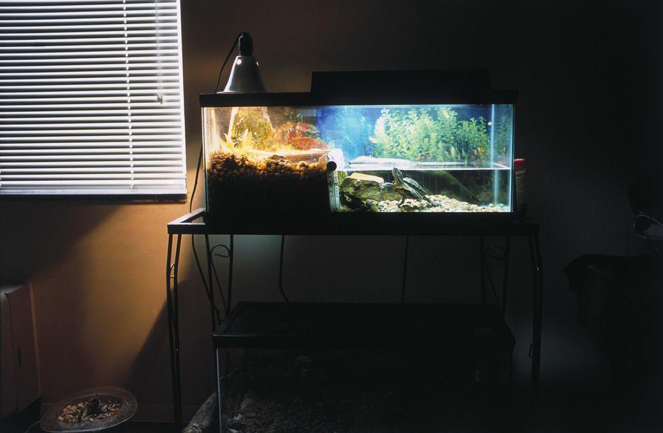 A turtle in an aquarium