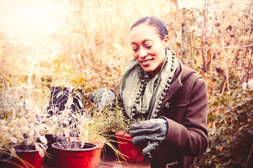 Women Planting in WInter