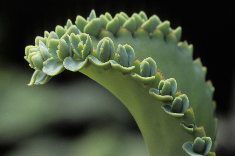 Vegetative Asexual Reproduction Types of Vegetative Pr...