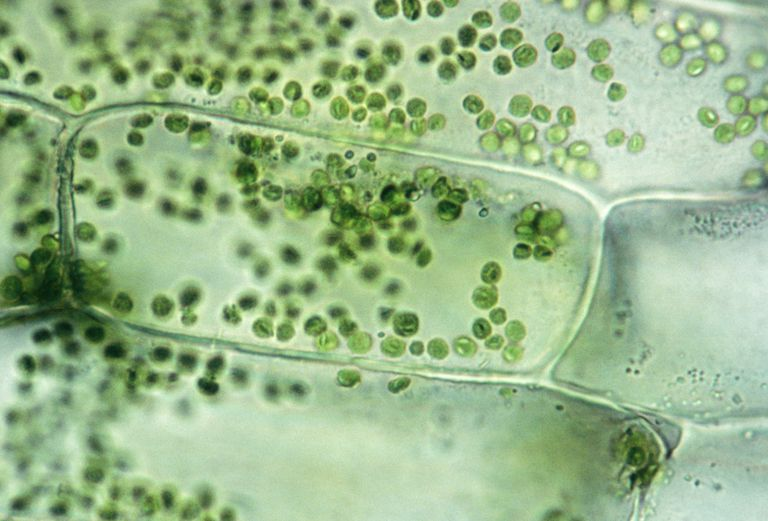 What Is A Plant Cell 373384 on Weather And Climate