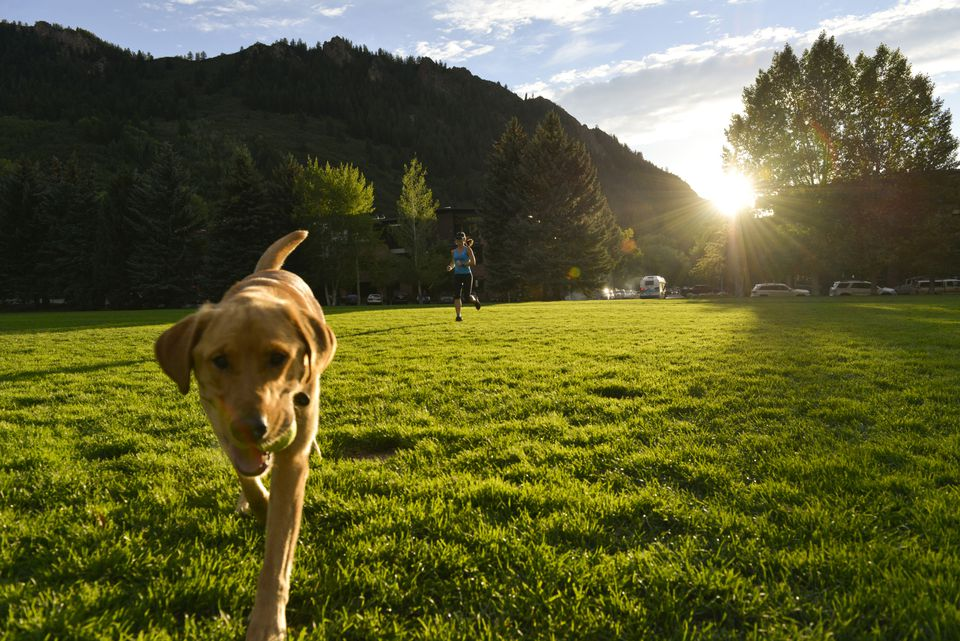Dog-friendly RV parks