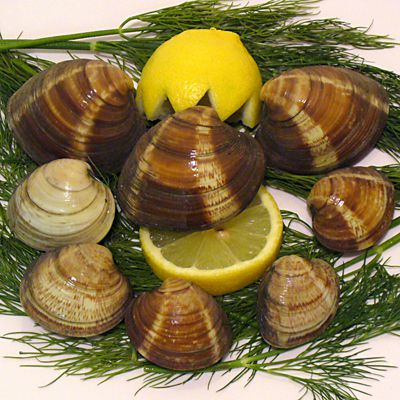 clams, poison, shellfish, seafood, recipes, receipts