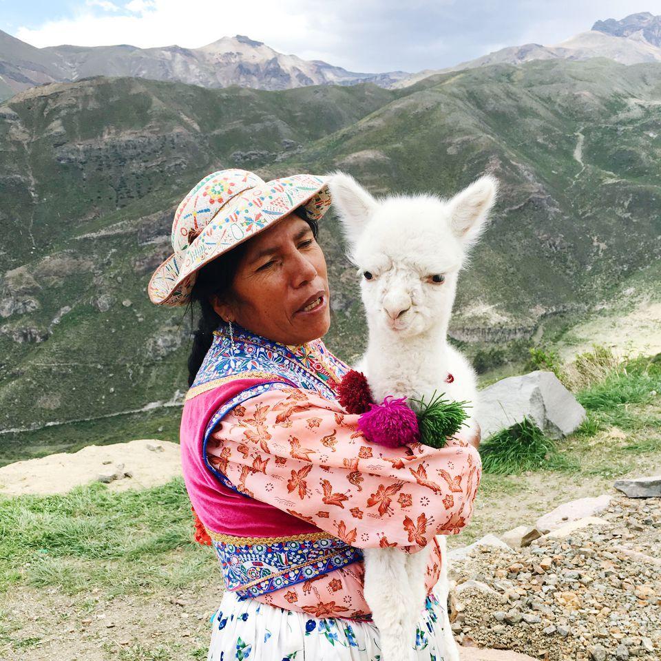 Alpaca in southern Peru