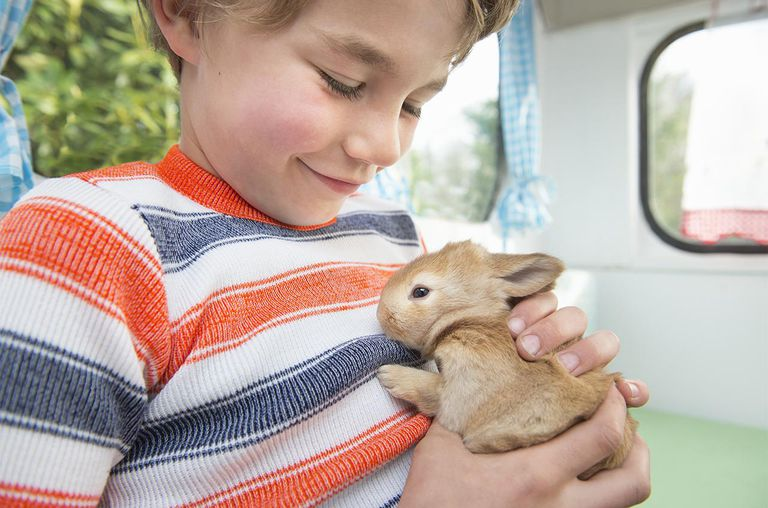 Young boy holding small bunny in his hands