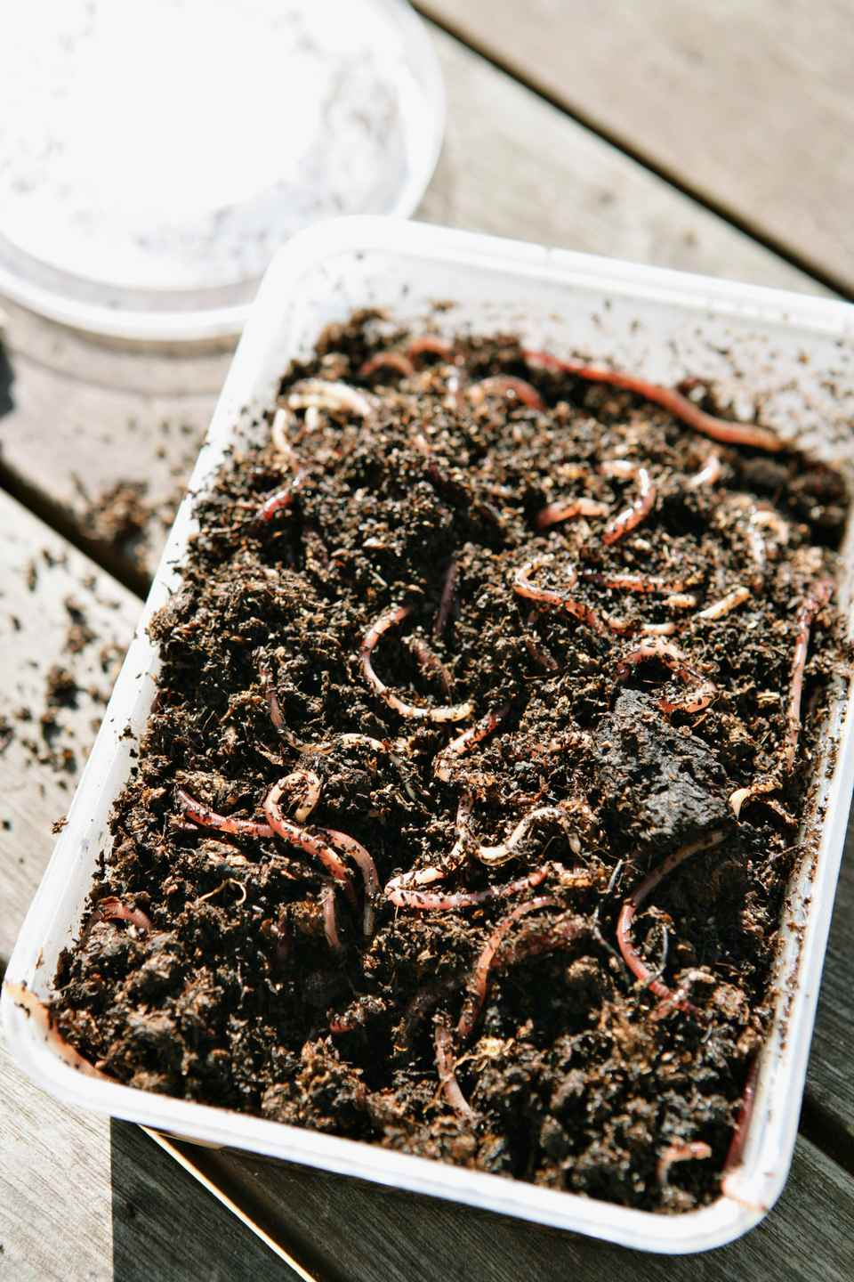 A small container full of worms and dirt