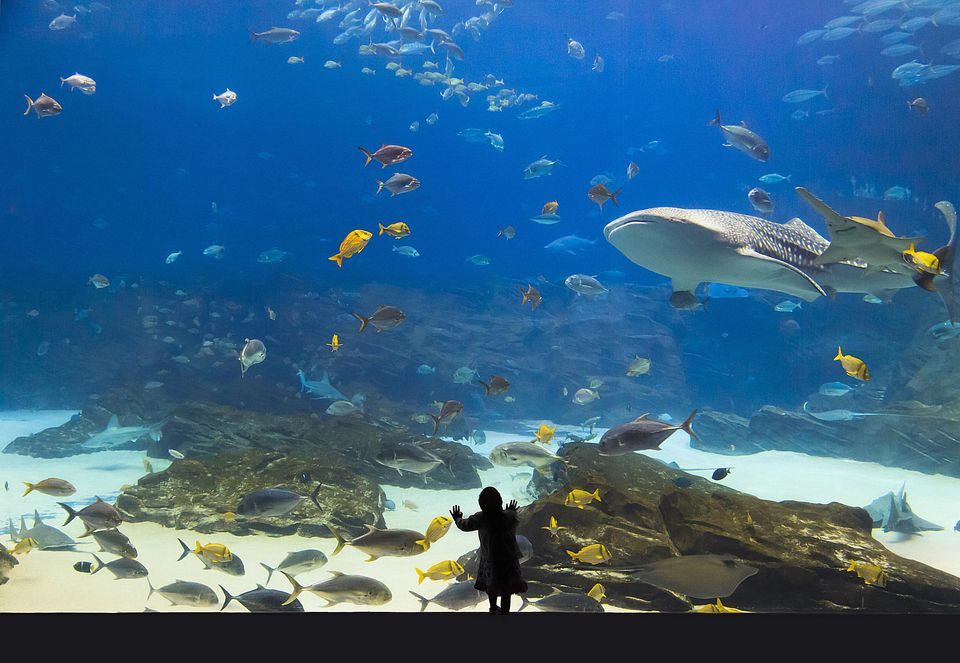 Where To Go Scuba Diving And Snorkeling In Aquariums - 10 awesome aquariums where you can spend the night with sharks