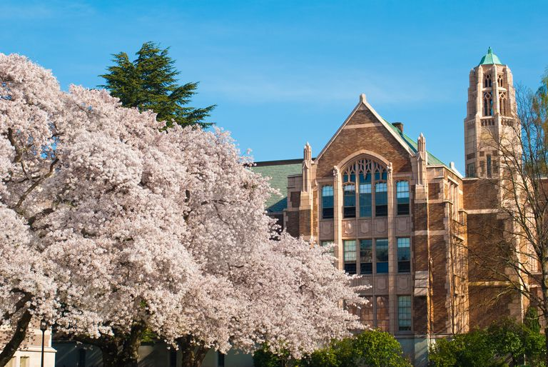 Trees and campus building at University of Washington