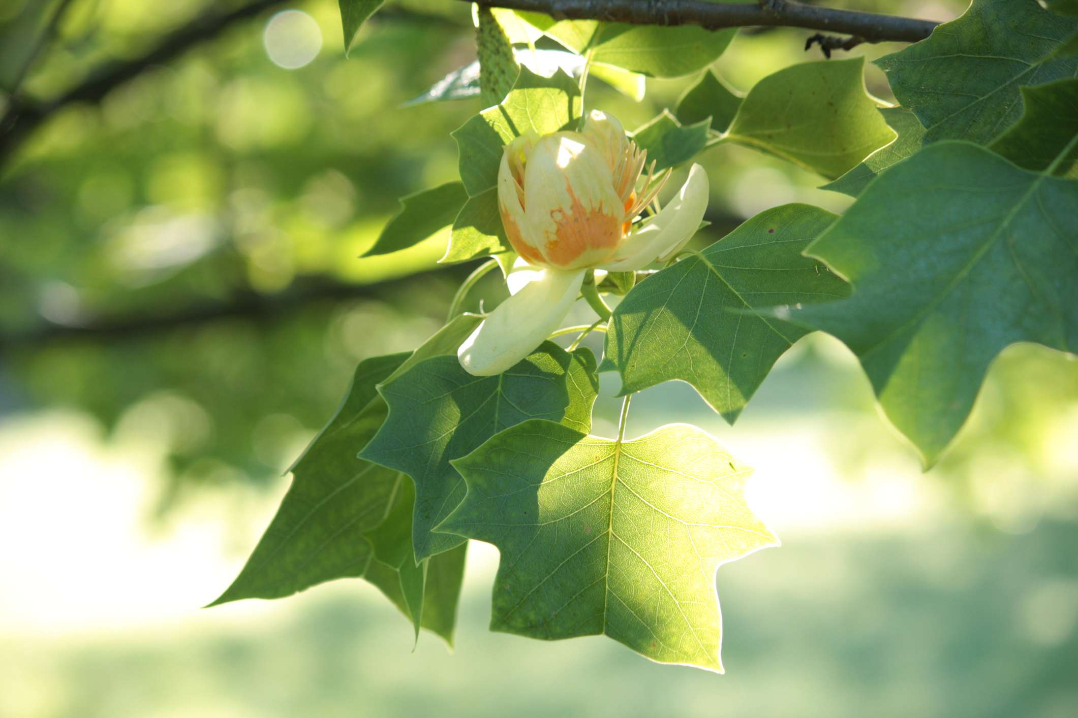 Try a Flowering Tree in Your Yard for Visual Impact