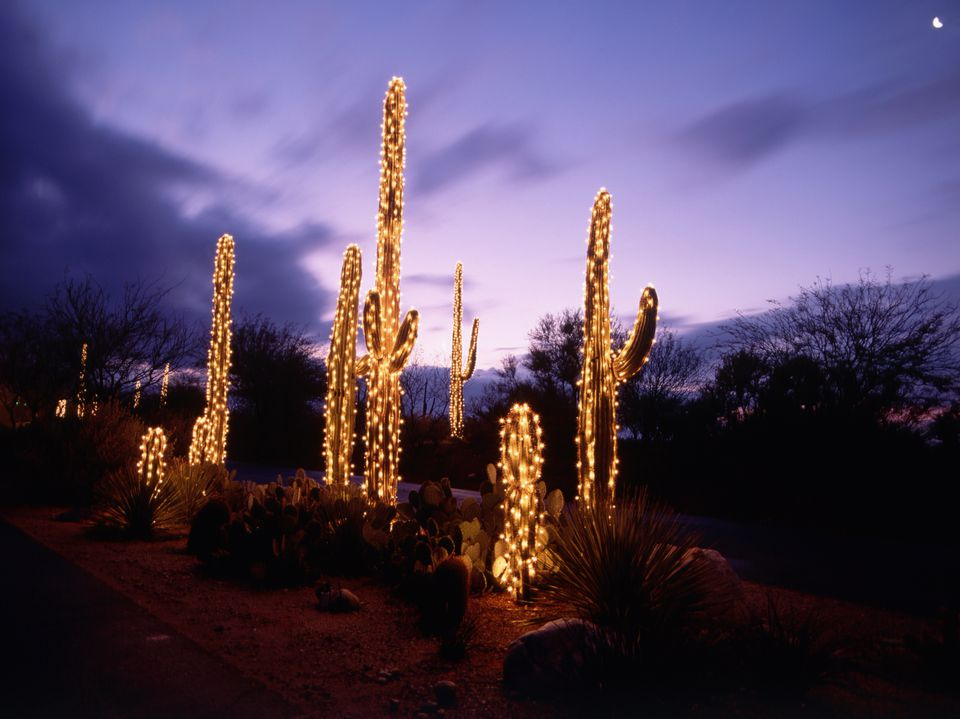 Saguaro Cacti Decorated with Christmas Lights