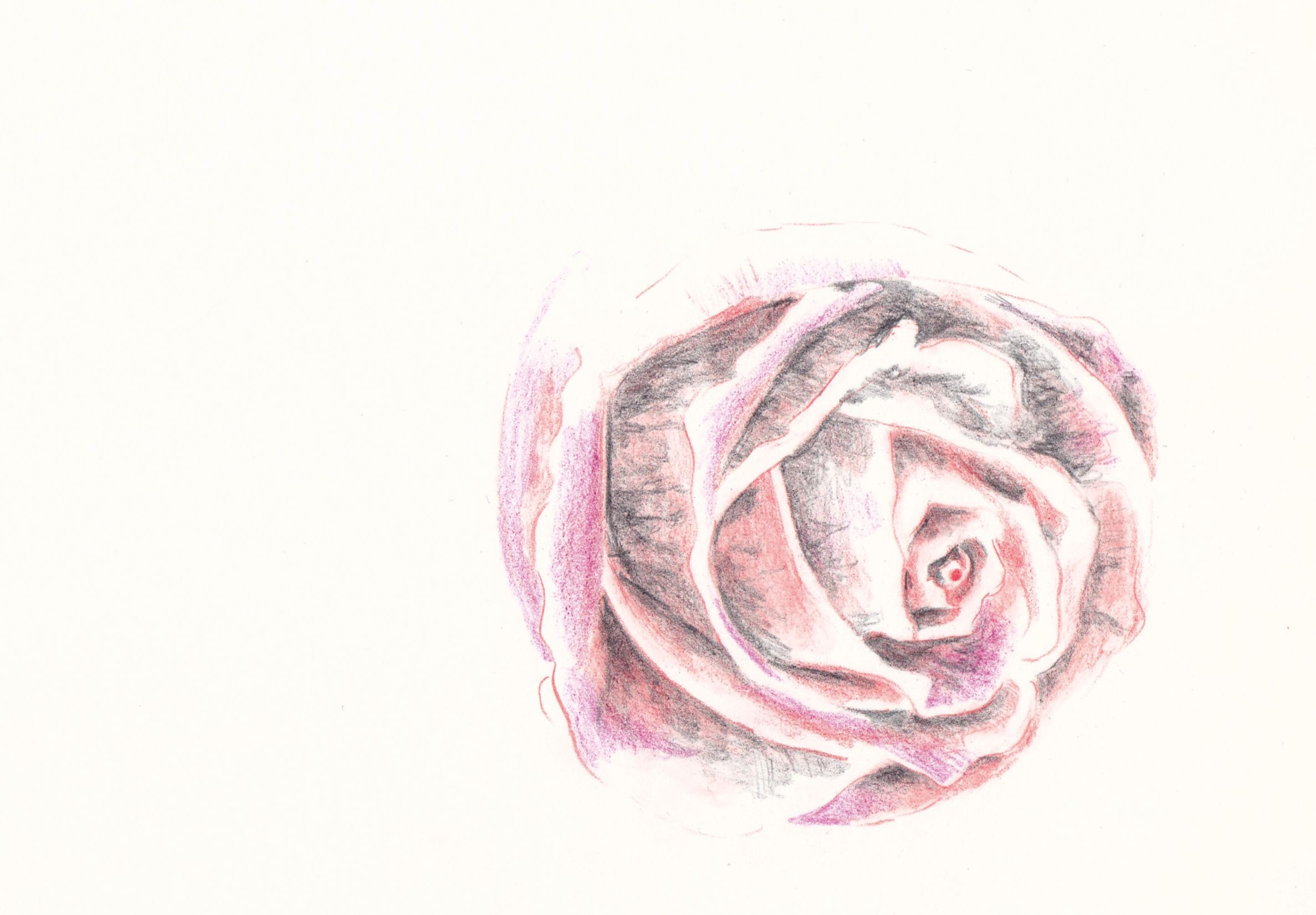 how to draw a rose in colored pencil