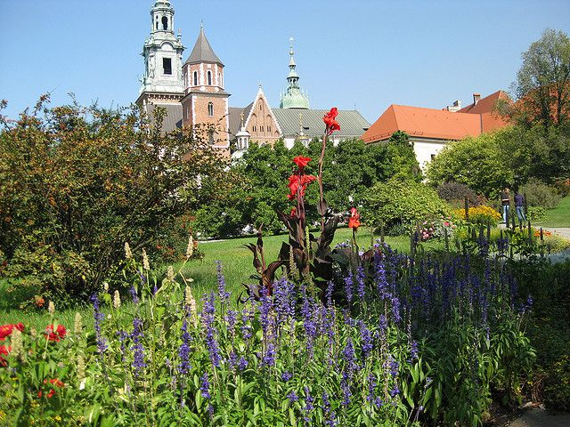 Flowers in Krakow
