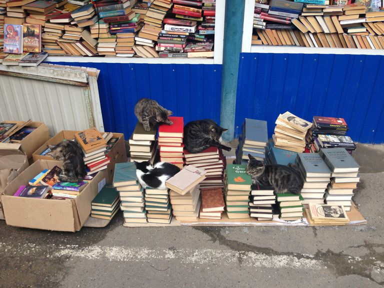 Whether it's books or cats, if you have a lot it may (or may not) signify a problem.