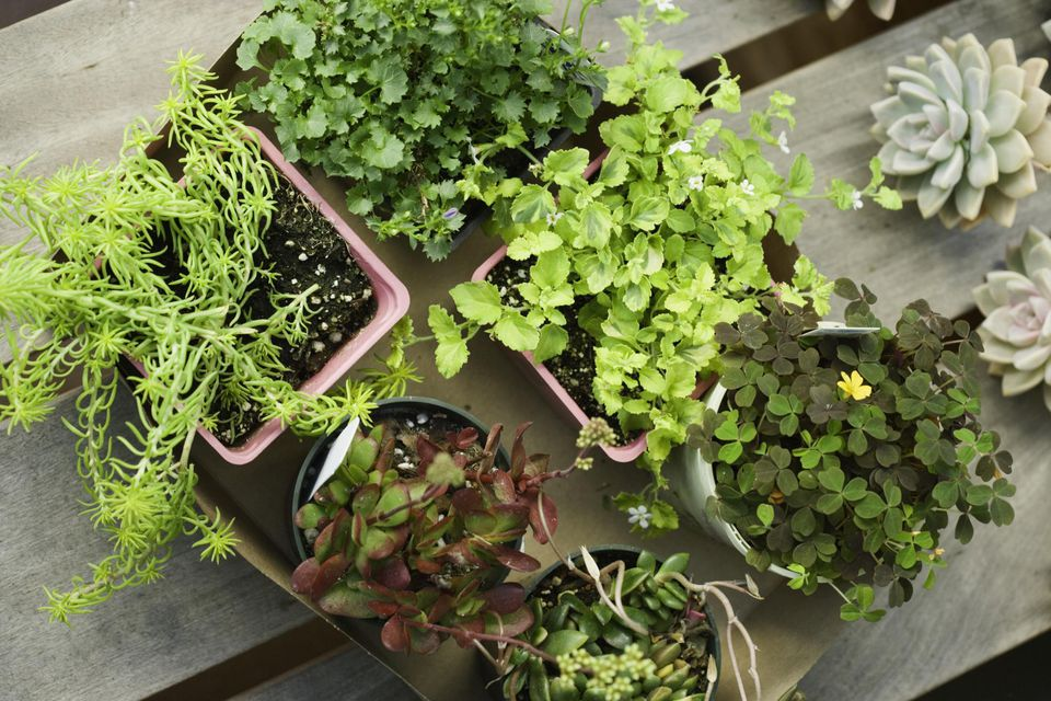 Assorted potted plants in box, overhead view