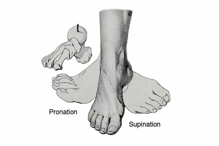 Pronation and Supination illustration