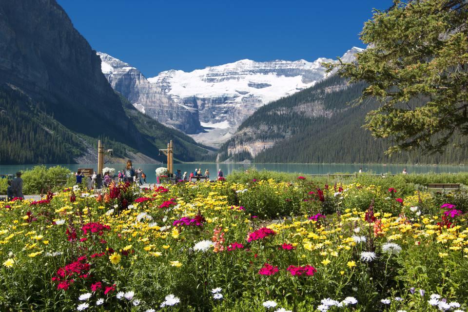 Wildflowers surrounding Moraine Lake in Banff National Park