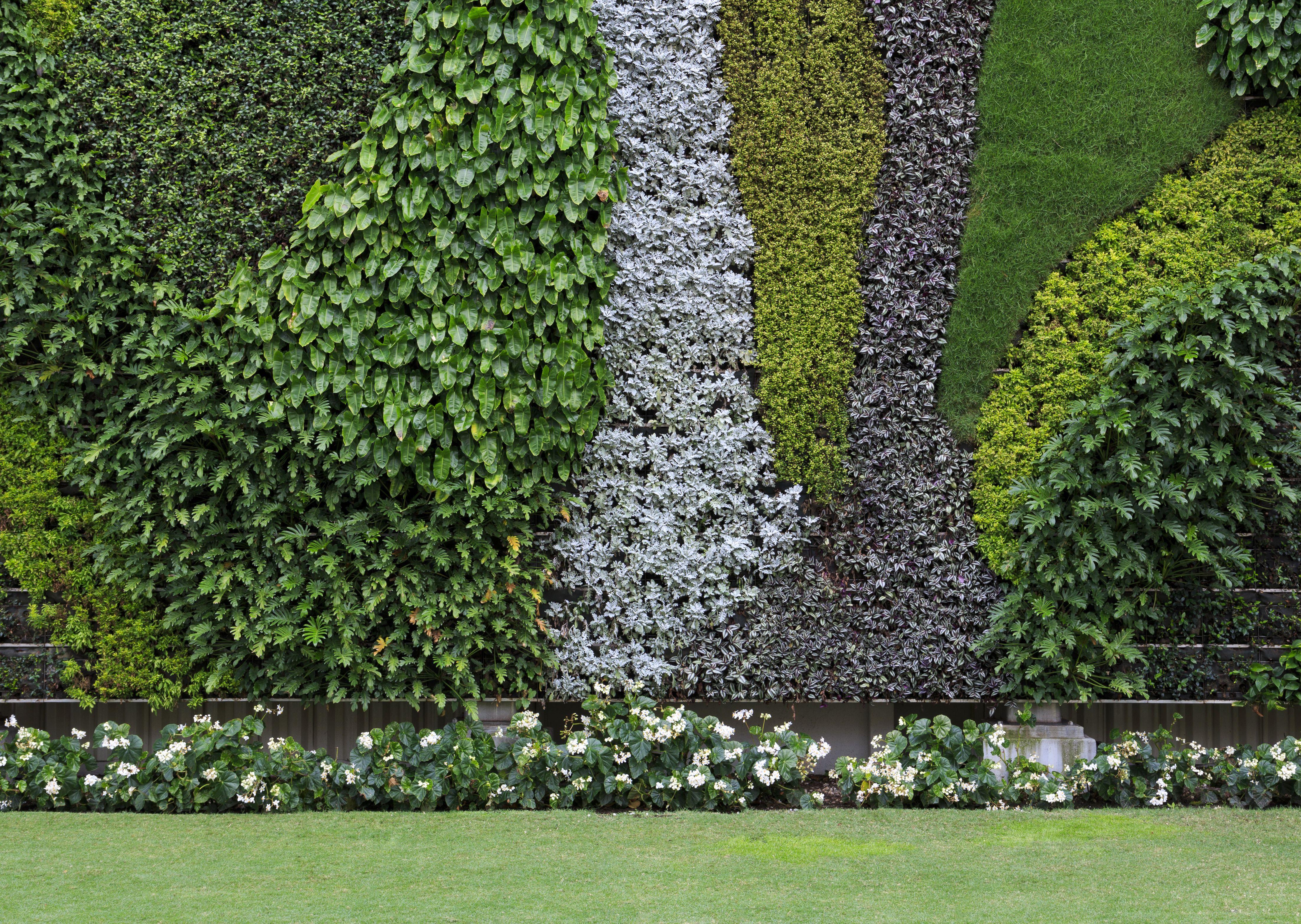 Jardines verticales para tu casa o negocio for Plantas recomendadas para jardin vertical