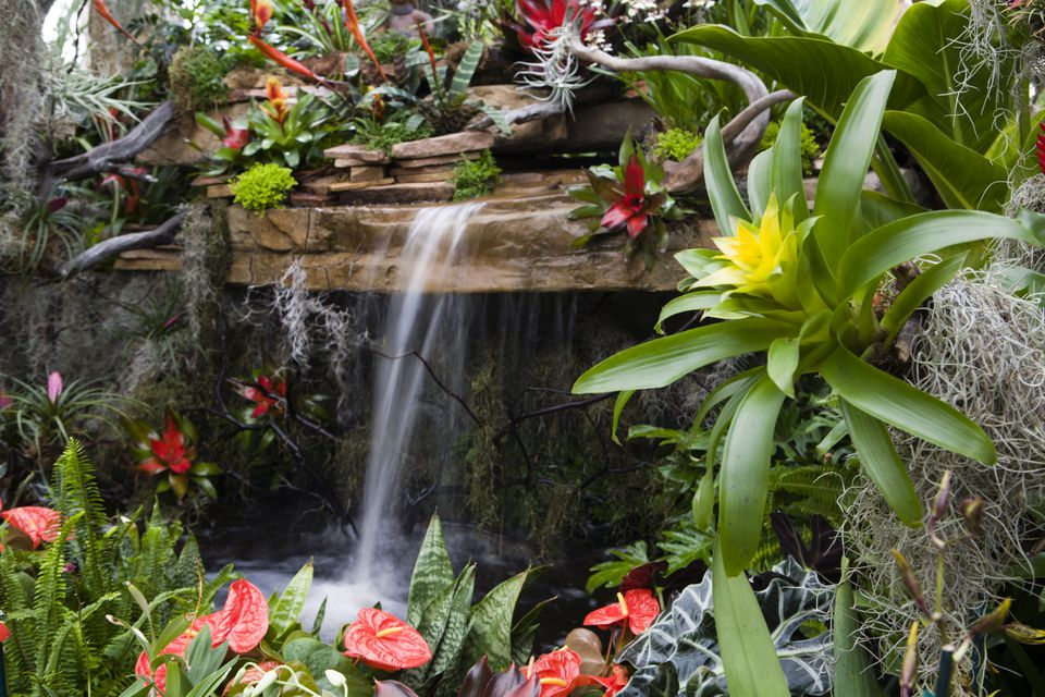 tropical garden waterfall