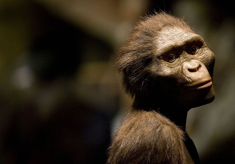 Sculptor's Rendering of the Hominid Australopithecus afarensis.