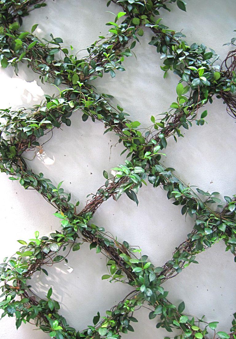 Los enredos de una planta trepadora for Fachadas con plantas trepadoras