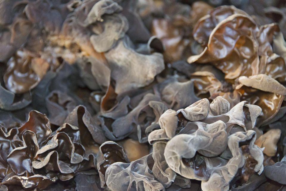 Black Chinese fungus, Beijing, China