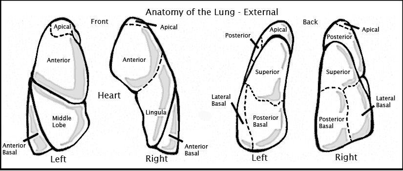 how to perform postural drainage for people with copd