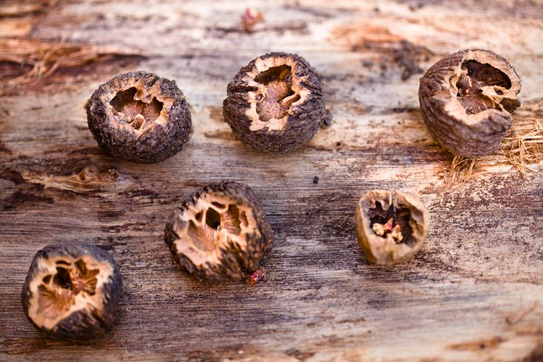 Cracked black walnuts on wood