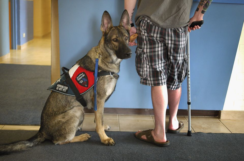 Training Psychiatric Assistance Dogs